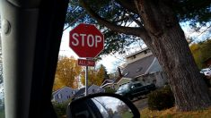 Stop Sign on Elmcrest